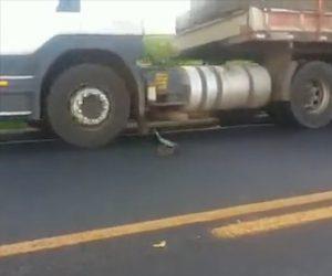 【動画】車道の真ん中にいるヘビがトラックに飛びかかっていく衝撃映像