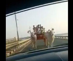 【動画】橋を渡る車に前から2台の牛車が現れ、牛が車に突っ込んでくる衝撃映像