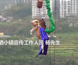 【動画】ブタをバンジージャンプさせる中国のテーマパークがヤバい!