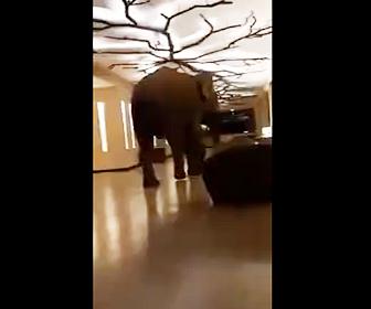 【動画】巨大な象がホテル内を歩き回るスリランカのホテルが凄い