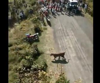 【動画】村に野生のトラが現れ村人に襲いかかる衝撃映像
