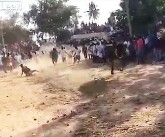 【動画】走る牛にロープで引きずられる男性