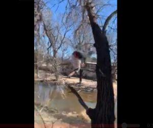 【動画】男性が木に登るが木が折れてしまい真っ逆さまに落下してしまう衝撃映像