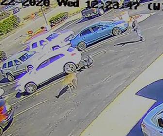 【動画】駐車場を歩く男性に猛スピードのシカが突っ込んでくる衝撃映像