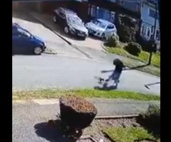 【動画】犬の散歩をしている男性に猫が飛びかかってくる衝撃映像