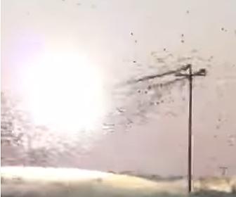 【動画】電線に止まる大量の鳥が感電してしまう衝撃映像