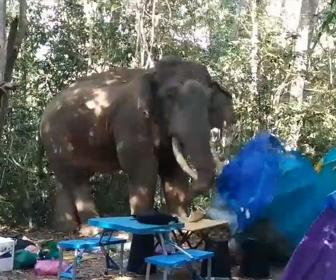 【動画】野生のゾウがキャンプ場に現れテントを破壊し食べ物を盗んでいく衝撃映像