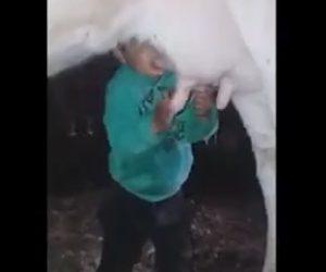 【動画】少年が牛の乳を直接飲みまくる衝撃映像