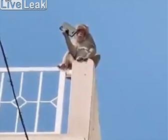 【動画】賢すぎる猿。人間のスマートフォンを奪い…