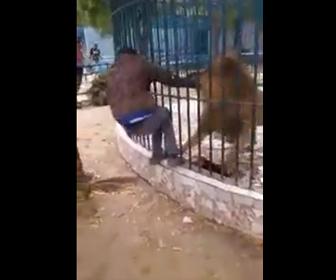 【動画】ライオンの柵を乗り越え檻に近づき過ぎた男に悲劇が…