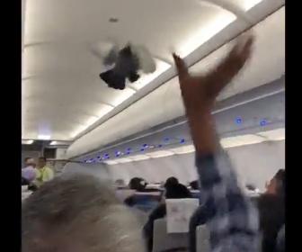 【動画】飛行機機内で密輸しようとした鳩が飛び回ってします衝撃映像