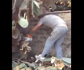 【動画】男性が巨大なサボテンを切り倒そうとするが…