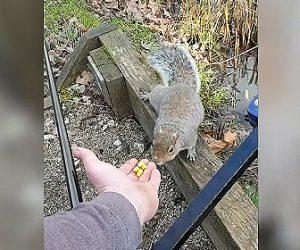 【動画】野生のリスに手から餌をあげようとするが…