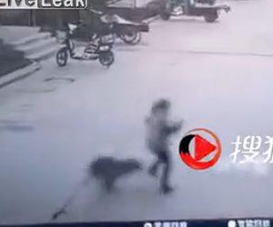 【動画】少女が必死に逃げるが野犬に襲われてしまう衝撃映像