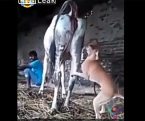 【動画】犬が牛にすり寄り交尾しようとするが…