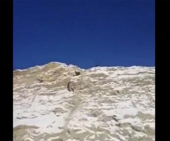 【動画】崖にいるヤギを崖の上から石を投げ落下させて捕まえようとするが…