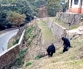 【動画】インドの警察官がサル達を追い払う方法が面白い