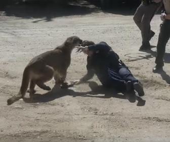 【動画】野生のピューマが女性警察官に襲いかかる衝撃映像
