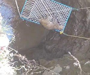 【動画】井戸に落ちたヒョウを村人が助けるが助け出した瞬間、ヒョウが襲いかかってくる