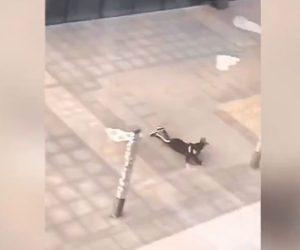 【動画】北京で風速100km/hの強風。人が飛ばされ建物外壁が吹き飛ぶ衝撃映像
