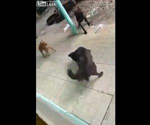 【動画】犬がヘビをくわえて振り回している所を女性が撮影しているが…
