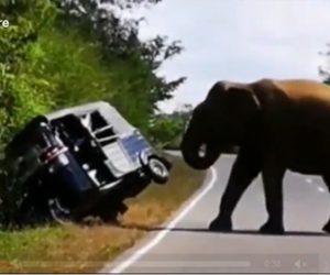 【動画】野生のゾウが餌を求めて車道を走る3輪車に襲い掛かる衝撃映像