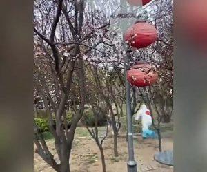 【動画】新型コロナの検疫で隔離されている少女が建物から走って逃げるが…