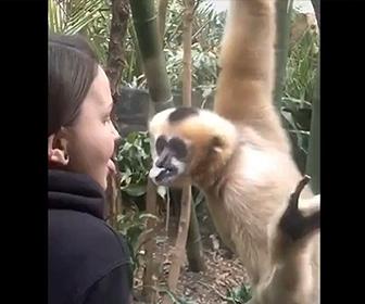 【動画】舌にピアスをしている少女を見たサルの反応が面白い