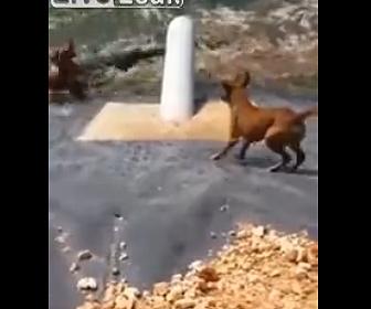 【閲覧注意動画】人工湖の斜面を登れない犬にワニが襲いかかる衝撃映像