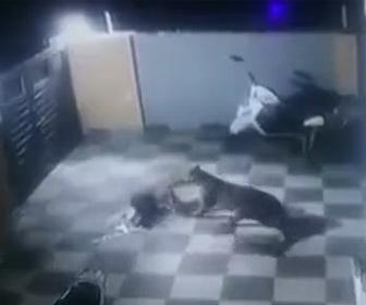 【戦い】飼い犬VSヒョウ 柵を乗り越えヒョウが飼い犬に襲い掛かるが…