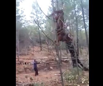 【衝撃】伐採した大木を2頭の馬で引っ張り運ぼうとするが…