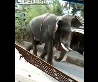 【動物】ゾウが大暴れ。家の塀を倒し車をひっくり返す衝撃映像