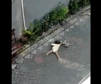 【動物】バイクに乗ったサルが赤ちゃんを連れ去ろうとする衝撃映像