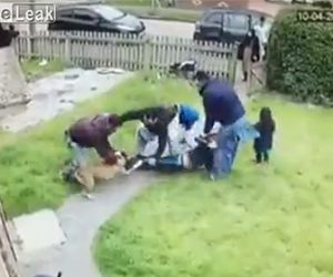 【動物】ピットブルが男性に襲い掛かり男性は必死に逃げるが…