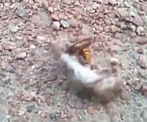 【戦い】スズメバチVSネズミ 壮絶な戦い
