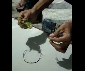 【衝撃】カマキリのお腹から寄生虫(ハリガネムシ)を取り出す衝撃映像