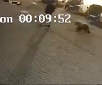 【動物】野生の熊VS人間 駐車場を歩く男性(26歳)に野生の熊が襲いかかる衝撃映像