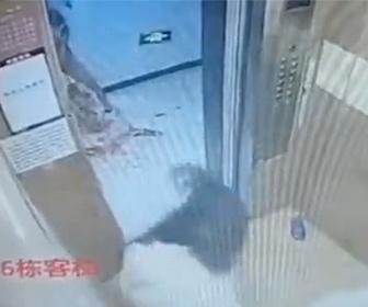 【動物】エレベーター内で2匹の犬が喧嘩。飼い主が必死に止めるが…