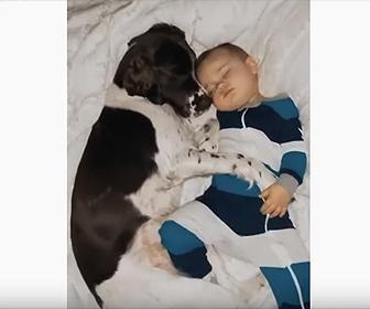 【動画】犬と一緒に寝る赤ちゃんが可愛すぎる!