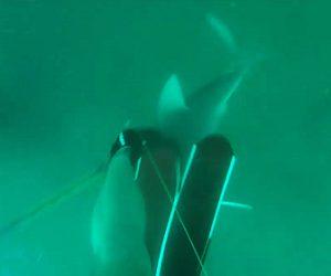 【衝撃】素潜りで水中銃を使い魚を捕る男性が水深17mでサメに襲われる衝撃映像