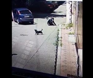【衝撃】犬に追いかけられ必死に逃げる男性が駐車車両に激突してしまう衝撃映像
