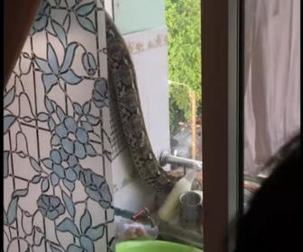 【動物】マンション4階のベランダから巨大なヘビが侵入してくる衝撃映像