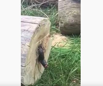 【閲覧注意動画】丸太を電動ノコギリで切ると中から真っ二つされた生物が出てくる衝撃映像