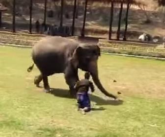 【動物】像が攻撃されている調教師を助ける衝撃映像