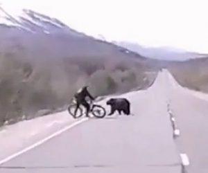【動物】サイクリストにクマが襲いかかり自転車で必死に体を守る衝撃映像