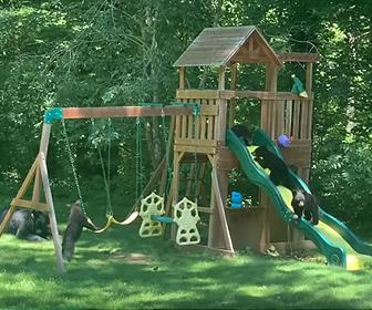 【動物】庭の遊具で遊ぶ子熊達が可愛い!