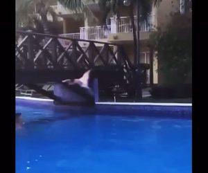 【動物】フラミンゴがプールにかかる橋に激突しプールに落下してしまう衝撃映像