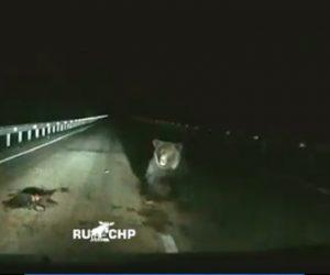 【動物】夜道を走る車の前に突然クマが突進してくる衝撃映像
