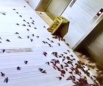 【衝撃】配達員が大量のザリガニをオフィスに配達、従業員が回収しわすれオフィスが…