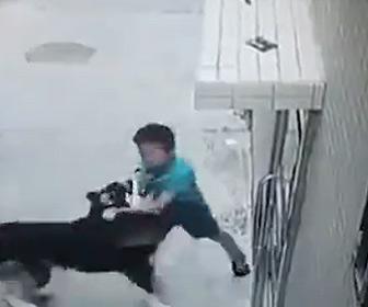 【衝撃】ハスキー犬が必死に逃げる6歳の少年に襲いかかる衝撃映像